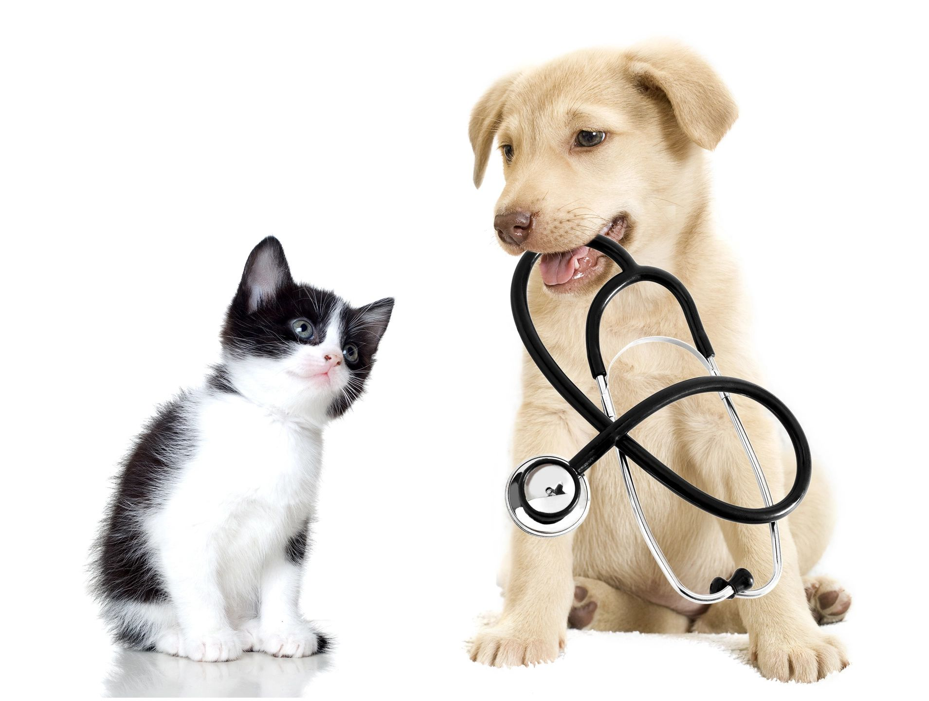 Animals with stethoscope